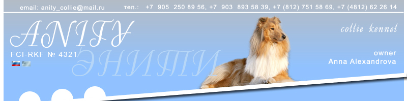 Collie kennel ANITY. Cultivation, results of exhibitions, sale of puppies, photos